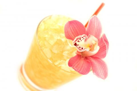mai-tai-orchid-6.jpg
