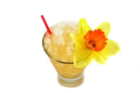 The Supreme Mai Tai Cocktail garnished with narcissus (    )